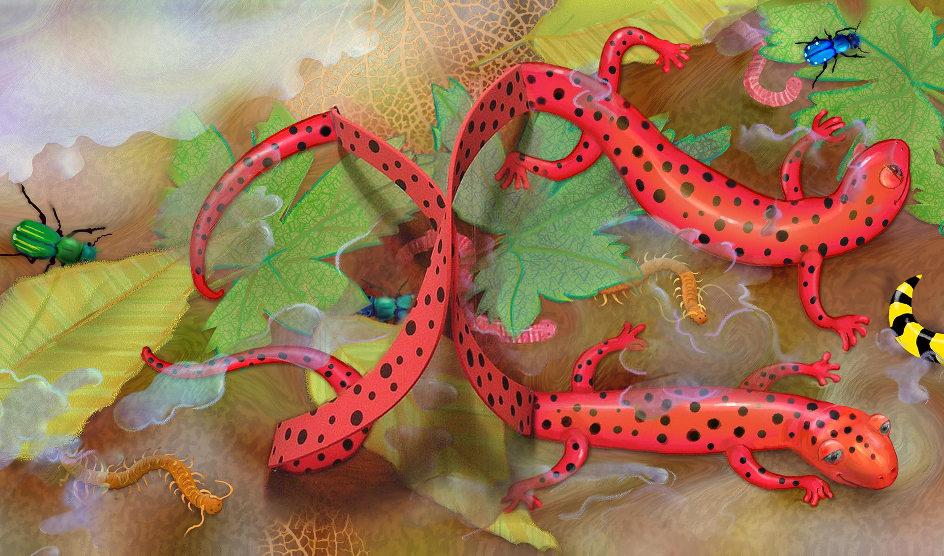 Salamander Rock Storybook Art illustrated by Karen Viola